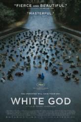 WHITE GOD | © 2015 Magnolia Pictures