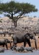 Elephants and zebra herds at waterhole in SERENGETI - Season 1   ©2019 Discovery Channel